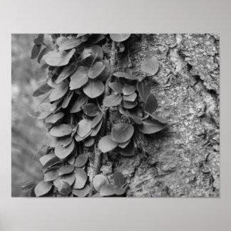 Leafy Vine On Tree In Black White Nature Poster