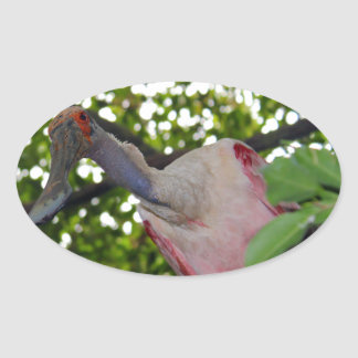Leaning Spoonbill Oval Sticker