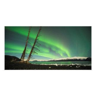 Leaning Tree Aurora Photo Card