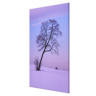 Leaning Tree in Snowy Field; Chippewa County; Stretched Canvas Prints