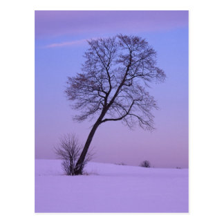 Leaning Tree in Snowy Field; Chippewa County; Postcard