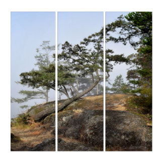 leaning tree triptych