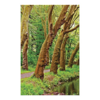 Leaning trees of the forest stationery