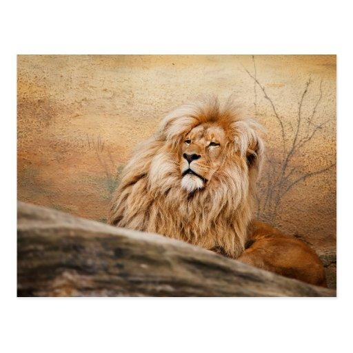 Leão Postales