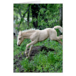 Leaping Colt Greeting Card
