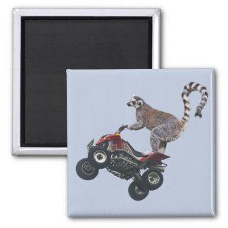 Leaping Lemur Magnet