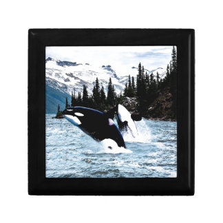 Leaping Orca Trinket Box