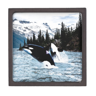 Leaping Orca Jewelry Box