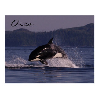 Leaping Orca Postcard
