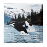 """Leaping Orca Tile<br><div class=""""desc"""">Two leaping killer whales before the untouched wilderness of the British Columbia coast. Originally in watercolor.</div>"""