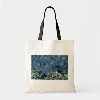 Least Auklet Tote Bag