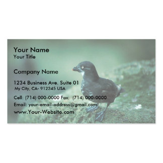Least Auklet Business Card