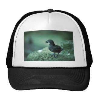 Least Auklet Trucker Hat