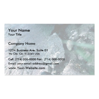 Least Auklets Business Card