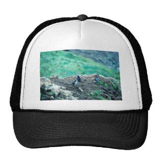 Least Auklets Trucker Hat