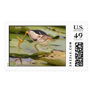 Least Bittern Postage Stamps