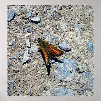 Least Skipper Butterfly 1 Poster