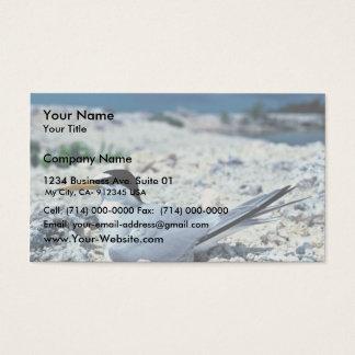 Least Tern Business Card