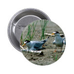 Least Terns Button