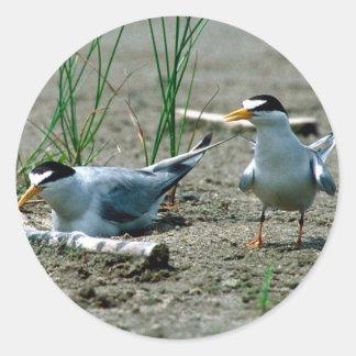 Least Terns Classic Round Sticker
