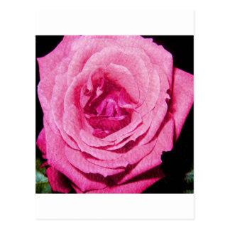 Leather Rose Postcard