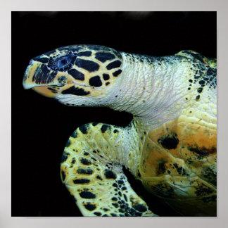Leatherback Sea Turtle Poster Print
