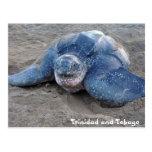 Leatherback Turtle in Trinidad and Tobago Post Card