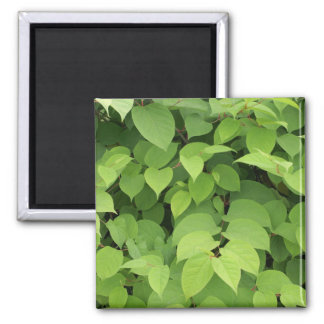 Leaves 2 Inch Square Magnet