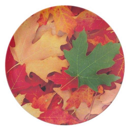 Leaves 2 plate