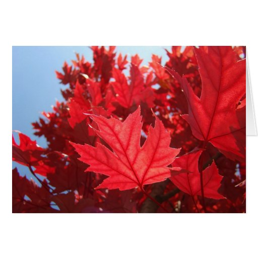 Leaves cards Red Autumn Leaves Fall Trees