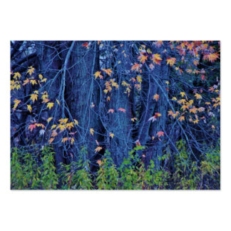 Leaves changing at the Beginning of Autumn Business Cards