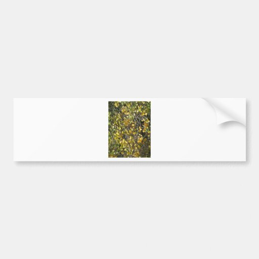 Leaves fall bumper stickers