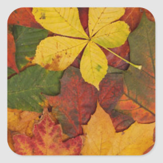 Leaves in Autumn Stickers