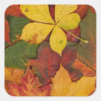 Leaves in Autumn Square Sticker