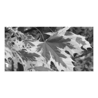 Leaves in Black & White Card