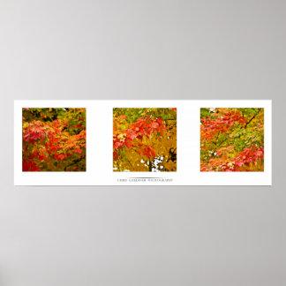 Leaves in Change Art Print
