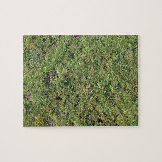 Leaves in grass jigsaw puzzle