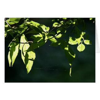 Leaves in light card