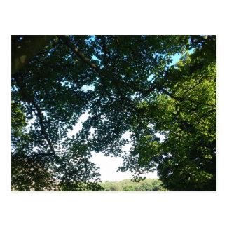 Leaves in Sunshine Postcard