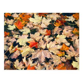 Leaves, Leaves, Leaves Postcard