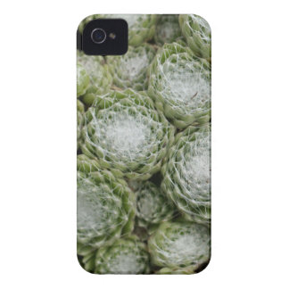 Leaves of a cobweb house leek, Sempervivum arachno iPhone 4 Case