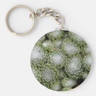 Leaves of a cobweb house leek, Sempervivum arachno Keychain