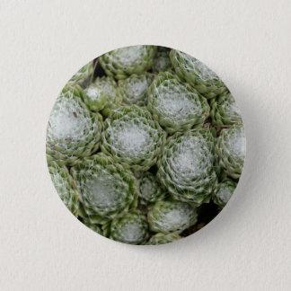Leaves of a cobweb house leek, Sempervivum arachno Pinback Button