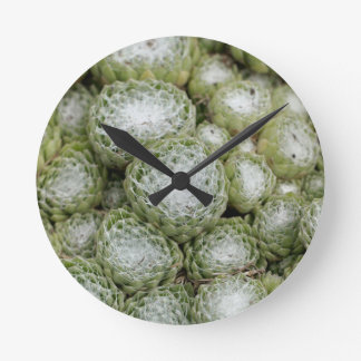 Leaves of a cobweb house leek, Sempervivum arachno Round Clock