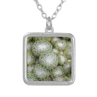 Leaves of a cobweb house leek, Sempervivum arachno Silver Plated Necklace