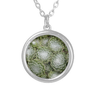 Leaves of a cobweb house leek, Sempervivum arachno Silver Plated Necklace