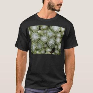 Leaves of a cobweb house leek, Sempervivum arachno T-Shirt