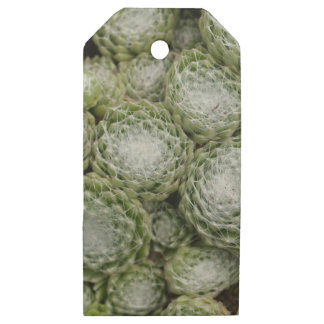 Leaves of a cobweb house leek, Sempervivum arachno Wooden Gift Tags