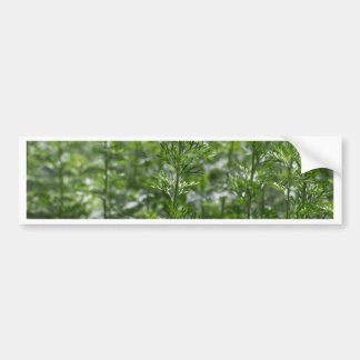 Leaves of absinthe bumper sticker