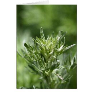 Leaves of absinthe card